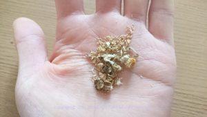 chamomile01